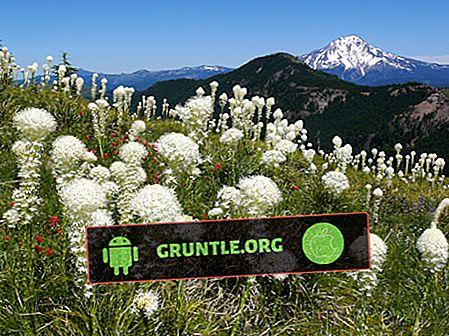 7 mejores aplicaciones de identificación de plantas y flores para Android